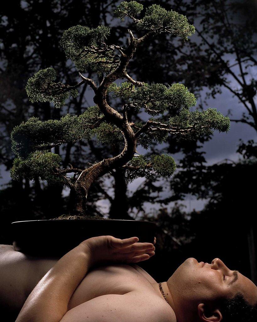 bonsai-lie.jpg